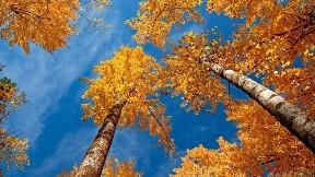 ağaç,sonbahar,doğa,gökyüzü