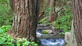 dere,doğa,orman,ağaç