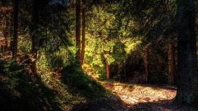 ağaç,orman,doğa,yol