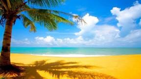 ağaç,deniz,kumsal,gökyüzü