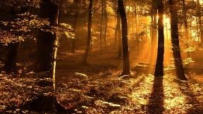 ağaç,orman,doğa,günbatımı
