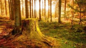 ağaç,orman,doğa