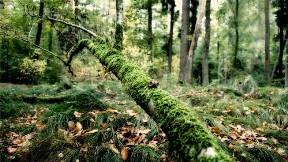 ağaç,orman,doğa,yosun