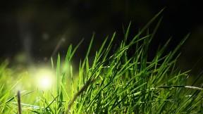 doğa,çimen