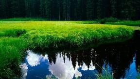 çimen,göl,doğa,ağaç