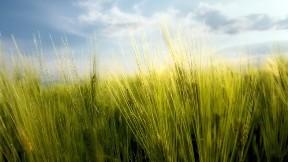çimen,gökyüzü,doğa