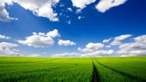 doğa,gökyüzü,çimen,bulut