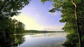 göl,doğa,orman,ağaç