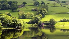 ağaç,göl,doğa,manzara,yansıma