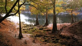 göl,doğa,ağaç