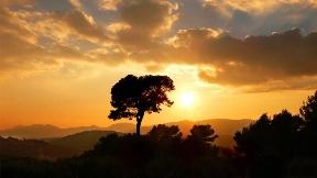 doğa,ağaç,gökyüzü,günbatımı