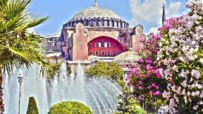 istanbul,cami,ağaç,şehir,ayasofya