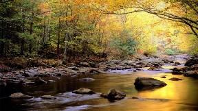 doğa,nehir,ağaç,sonbahar
