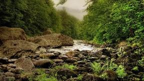 doğa,nehir,ağaç