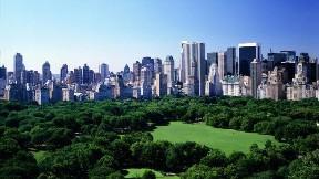 newyork,şehir,manhattam,ağaç