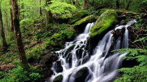 doğa,şelale,nehir,orman