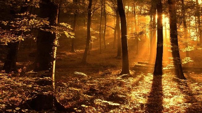 Ağaçların Arasından Günbatımı