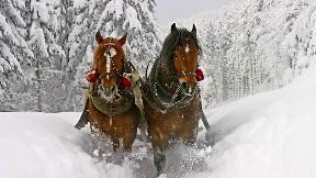 at,kar,orman,yol