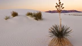 çöl,doğa,bitki