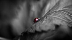 uğur böceği,yaprak,böcek