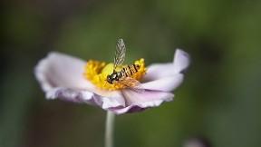 arı,çicek,böcek