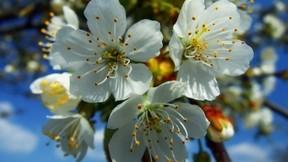 çiçek,gökyüzü,ağaç