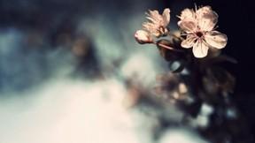 çiçek,makro,güneş
