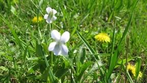 çiçek,çimen,güneş,yaprak