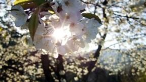 çiçek,güneş,ağaç,gökyüzü
