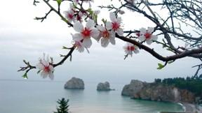 yağmur,deniz,çiçek,ağaç