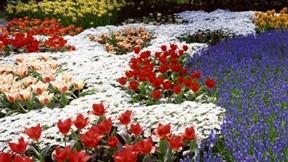 çiçek,lale,güneş,çimen,bahçe