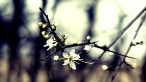 çiçek,dal
