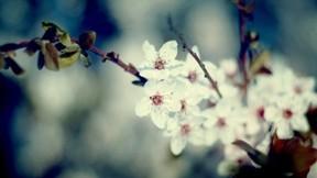 çiçek,yaprak,dal