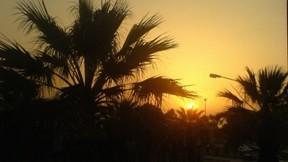 izmir,şehir,günbatımı,palmiye