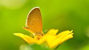 kelebek,hayvan,çicek,yaprak,böcek