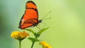 kelebek,çicek,yaprak,böcek