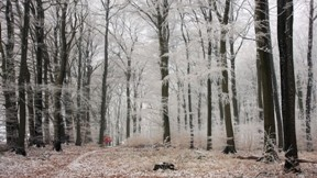 kar,orman,ağaç,doğa,kış