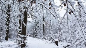 orman,kış,ağaç,kar