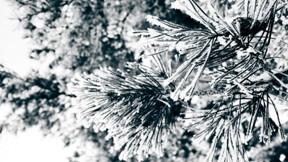 ağaç,kar,yaprak,kış