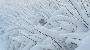 kar,kış,dal,çalı