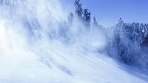 kar,orman,ağaç,kış,güneş