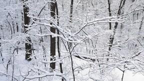 kar,orman,kış,ağaç