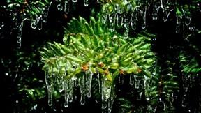 buz,kar,kış,ağaç