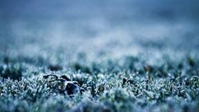kış,çimen,buz