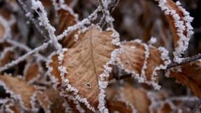 buz,yaprak,kış,don