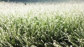 kar,çimen,kış,buz