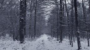 kar,orman,kış,ağaç,yol
