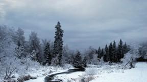 akarsu,kar,orman,kış,ağaç
