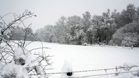 kar,kış,doğa,ağaç,manzara,orman