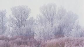 kar,orman,kış